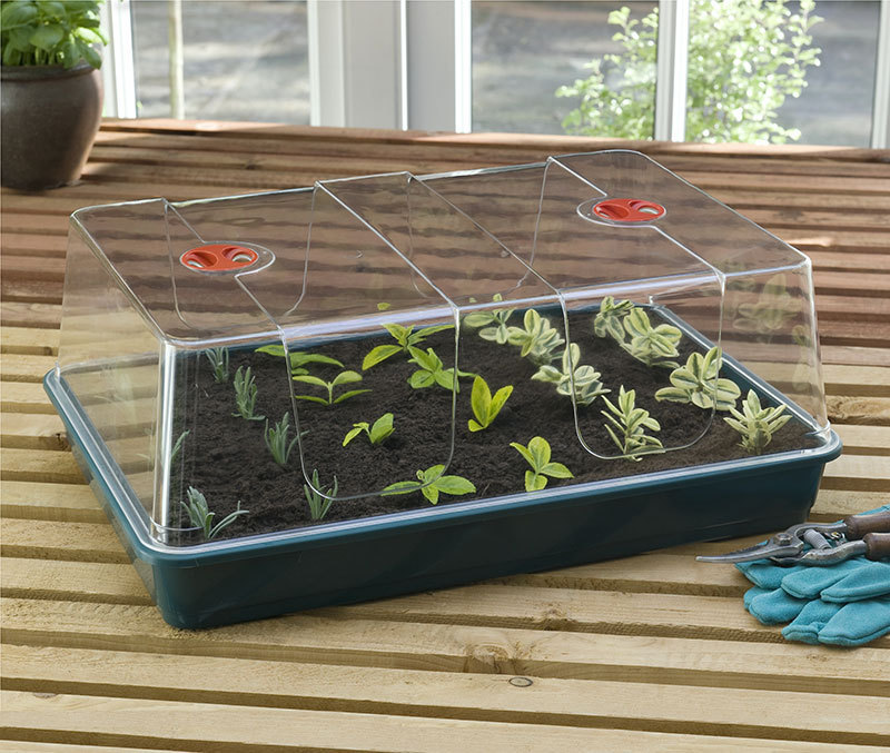BIG GERMINATION GREENHOUSE